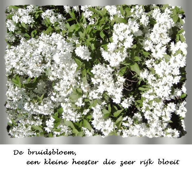 Foto van de plant in mijn tuin
